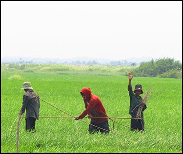 Enfants-dans-la-riziere-cadre2